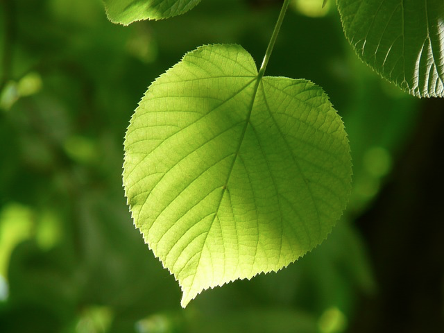 leaf is a symbol of value proposition